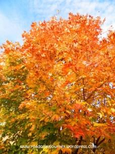 color change, 11/9/13