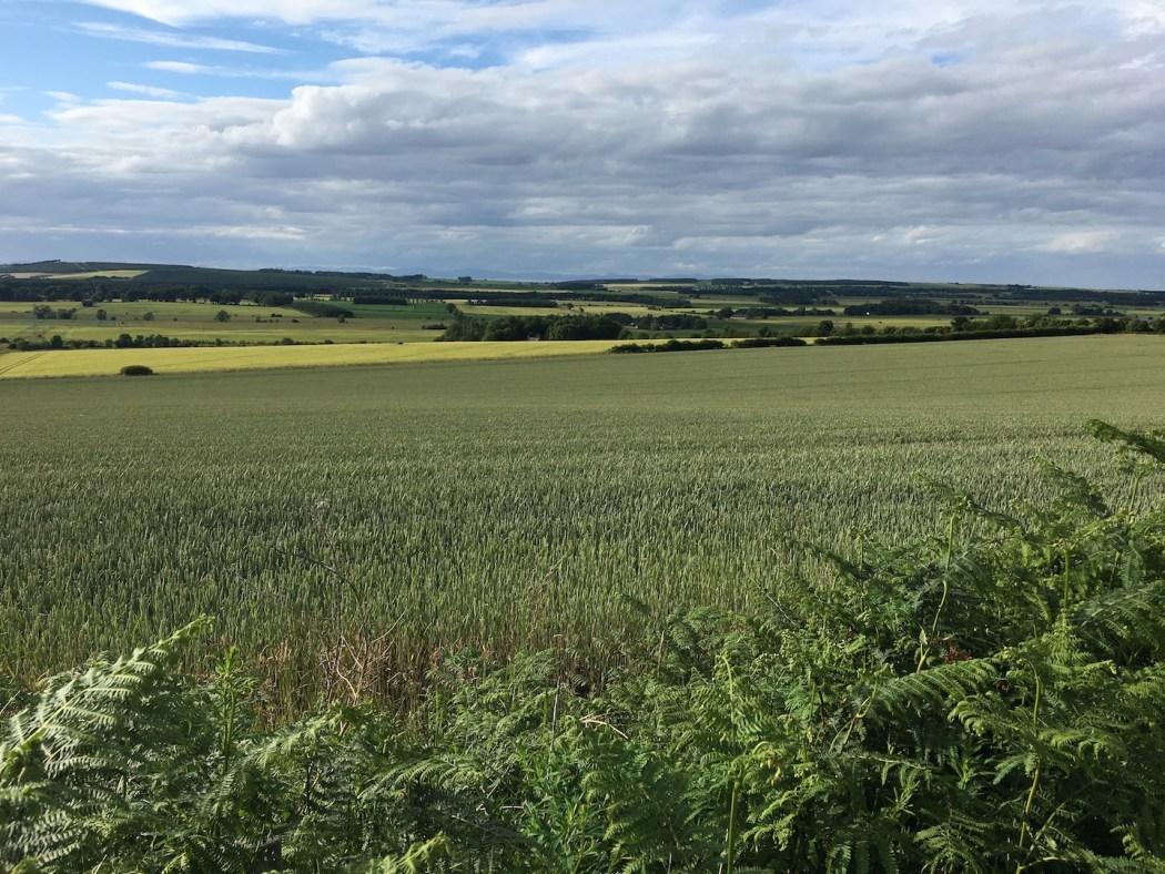 Fields of Moray