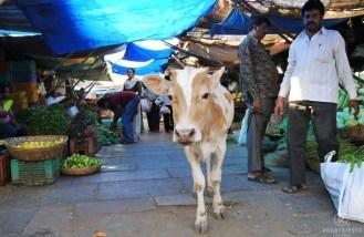 Mysore Devaraja Market
