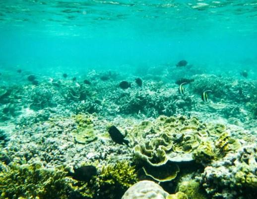 Unterwasserwelt Gili Meno