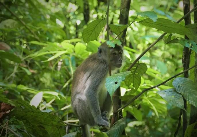 Gunung Leuser Nationalpark Wanderung