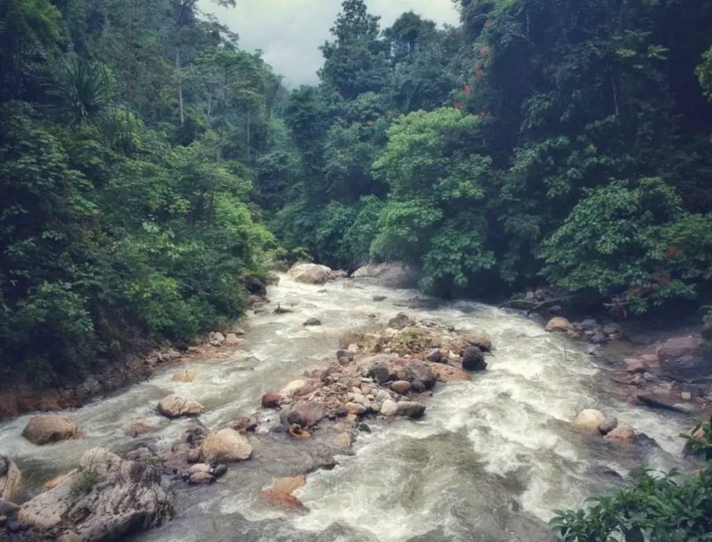 Ketambe | Ein Besuch bei den Orang Utans auf Sumatra