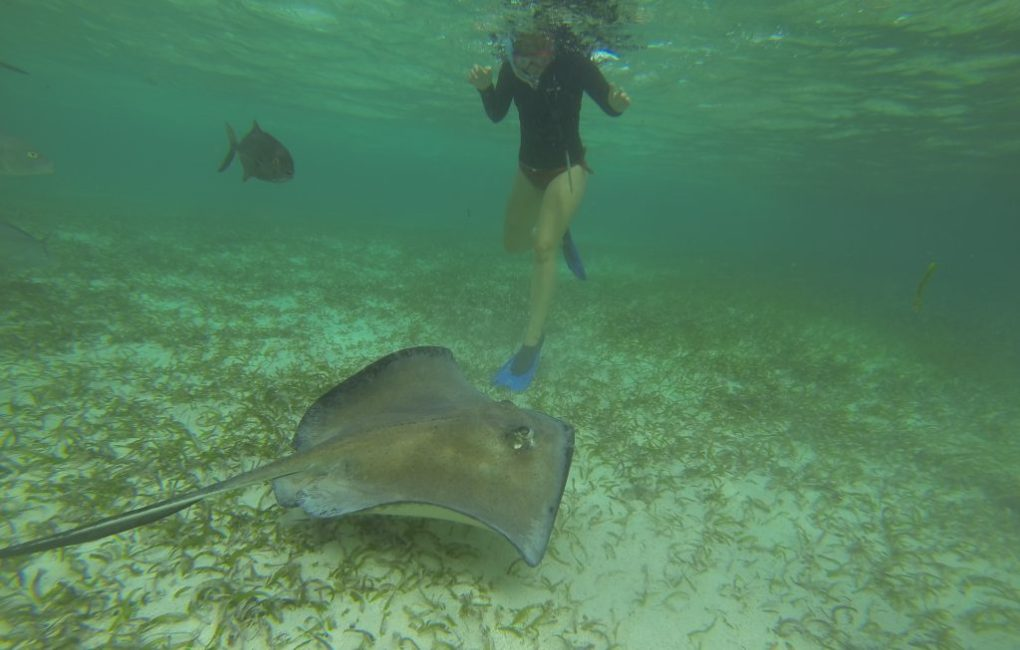 Shark Ray Alley, Caye Caulker, Belize
