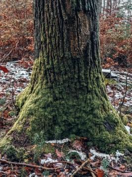 Traumschleife Masdascher Burgherrenweg Baum