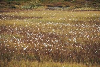 Graslandschaft am Bitihorn