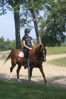 Choco the Horse