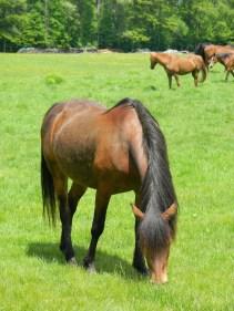 Cyndi the Horse