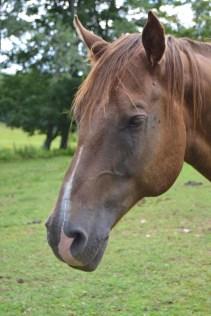 Gabe the Horse