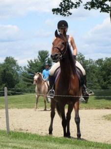 Hayze the Horse
