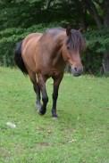 Moon the Horse