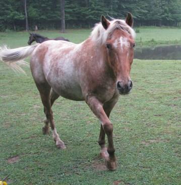 Nonny the Horse