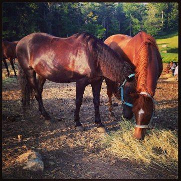 Rainier the Horse