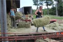 hay work duty