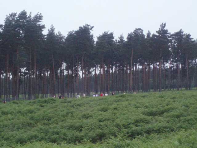 bracknell-forest-five-runners-on-the-heath.jpg