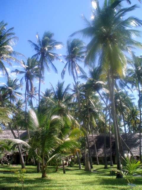 beach-hotel-and-palms-kenya.jpg