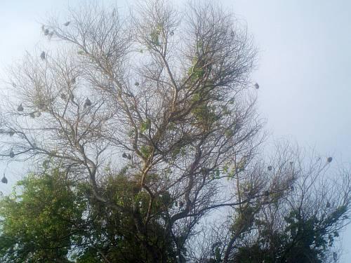 weaver-bird-nests-kenya-by-roadsofstone