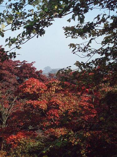 new-england-leaves-in-fall-by-roadsofstone