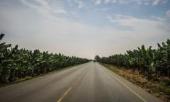 Endless banana fields