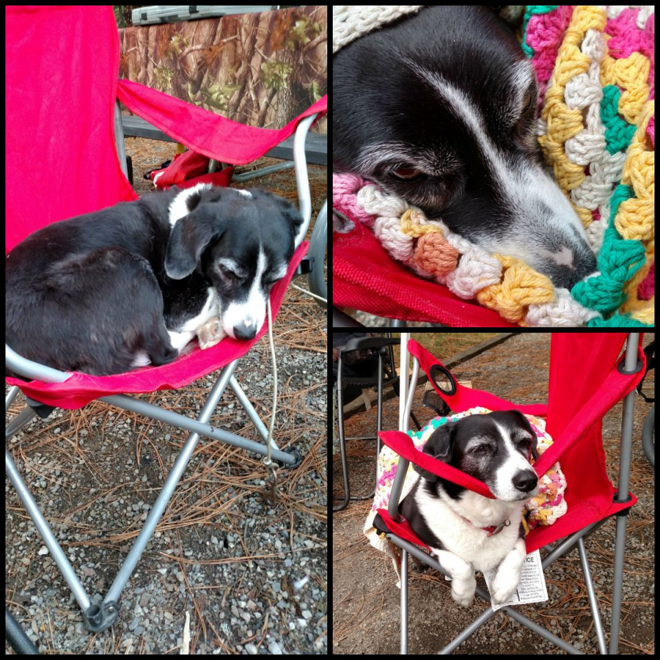 our dog likes to go camping