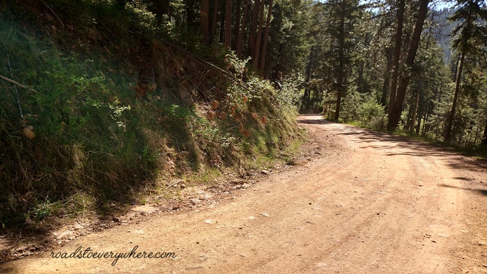 Forest Road on Canfield Mountain