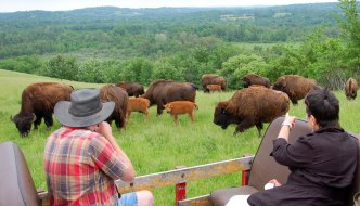 "Buffalo safari, new eco island and the ""Long Lunch"" in Ontario Canada"