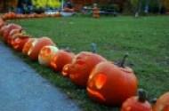pumpkins in a park