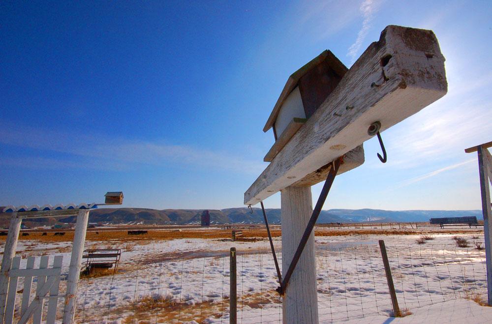 grain elevator in Dorothy, Alberta