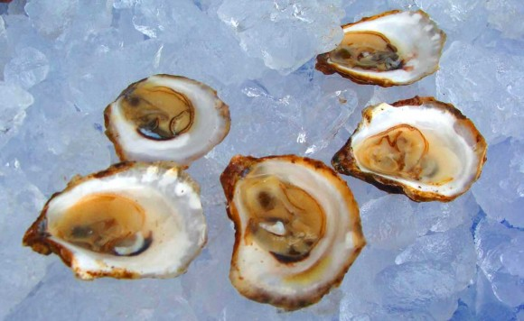 Shucked-Oysters-ready-for-eating