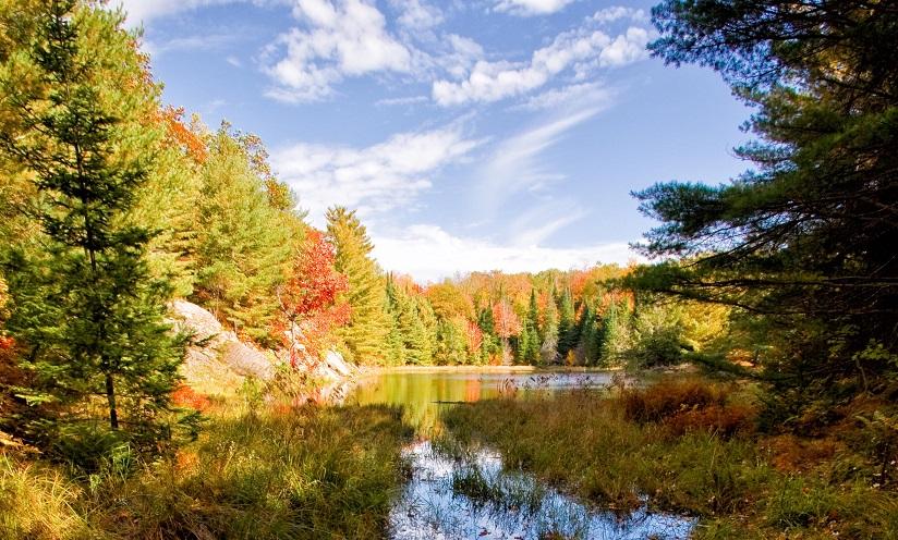Fire Tower Trail - Amber Lake