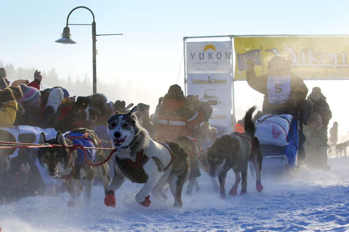 Yukon sled dog race mushers