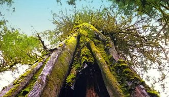 Port Renfrew – Tall Tree Capital of Canada