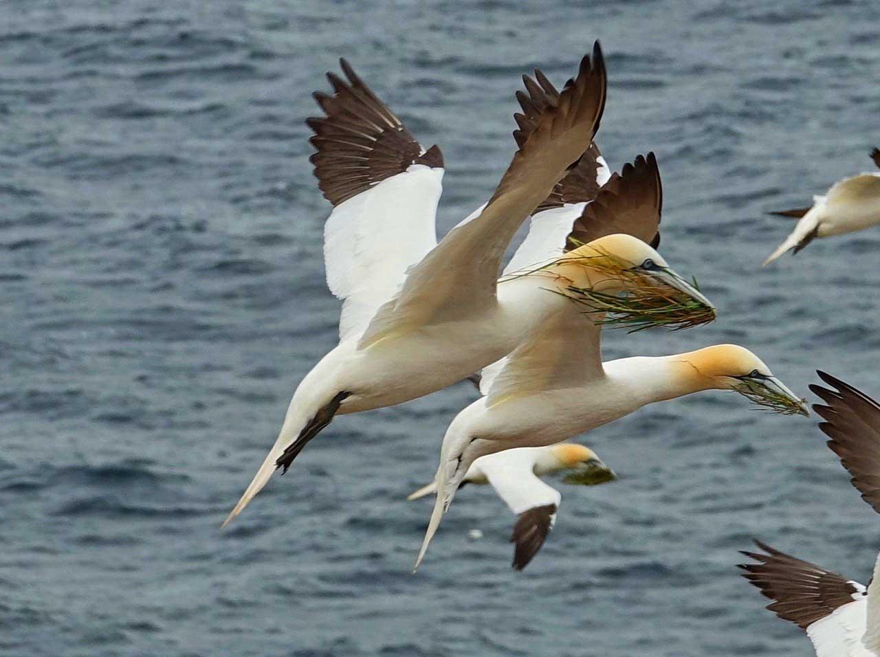 birds at Forillon National Park