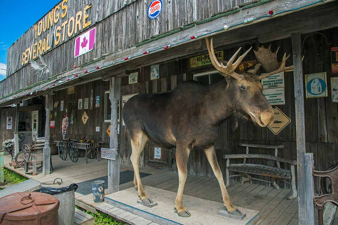 Wawa Ontario Moose