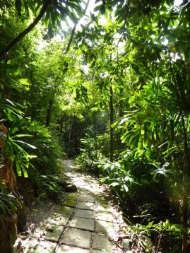 More jungles