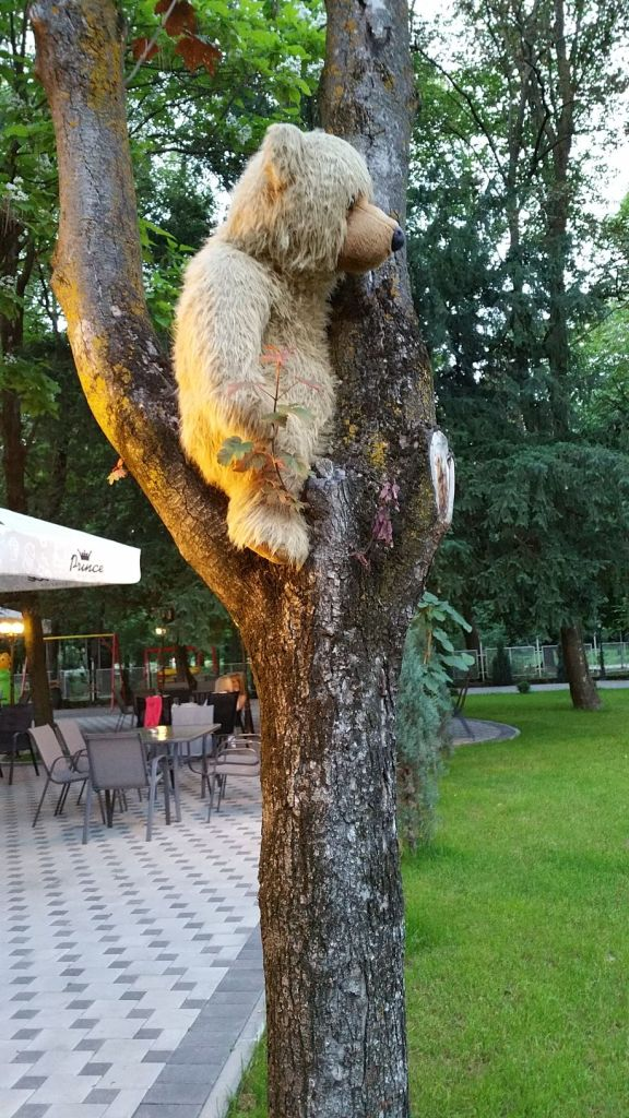 Ours dans un arbre à l'hôtel Camp Karagaq - Kosovo