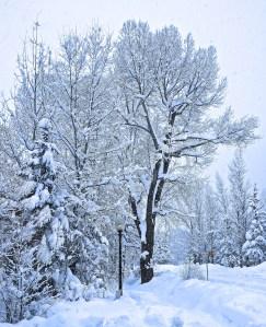 Telluride Snow 0