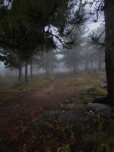 mountain pathway in the mist