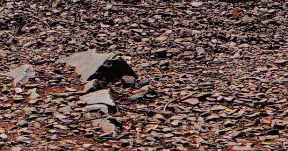 Brown shale beach