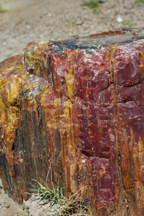 Minerals petrified in a Log