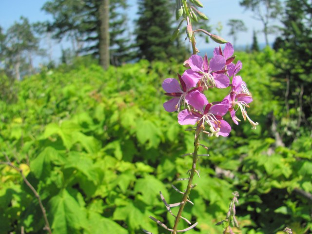 Hike to Lookout Louise at Isle Royale National Park