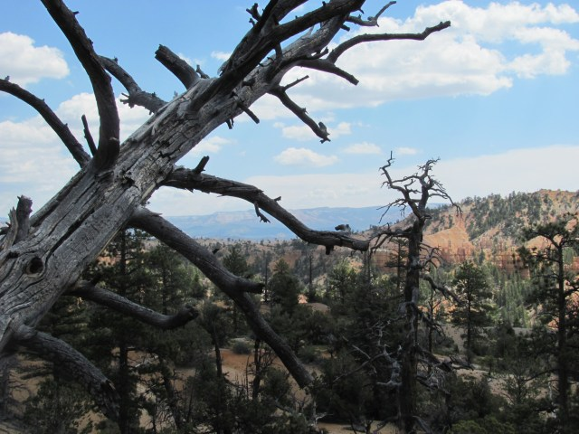 Views on the Fairyland Loop Trail in Bryce Canyon National Park