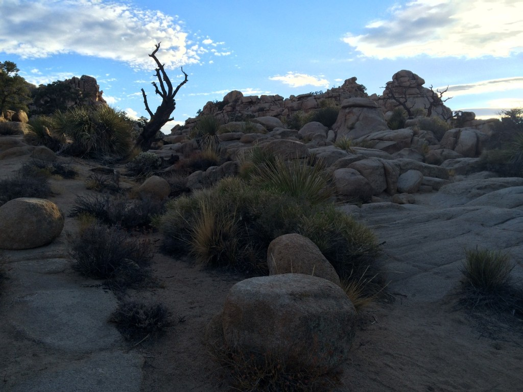 Best day hikes Joshua Tree National Park Hidden Valley Loop