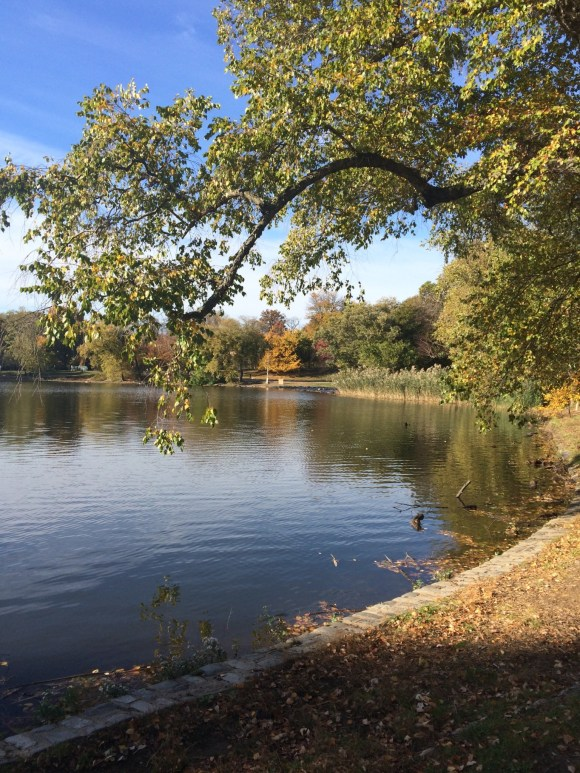 Save money in New York City- Prospect Park