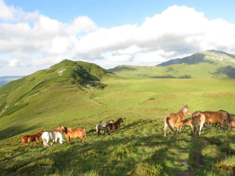 Wild horses greeting me