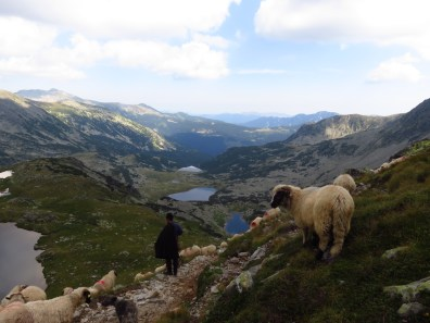 Shepherd with a view