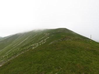 Papusa Peak in the clouds + sheep