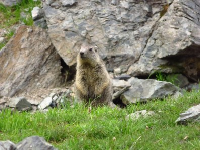 Marmot! Up close!