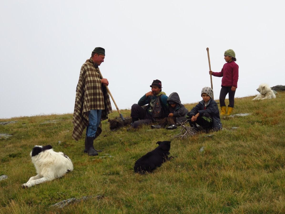 Shepherd family