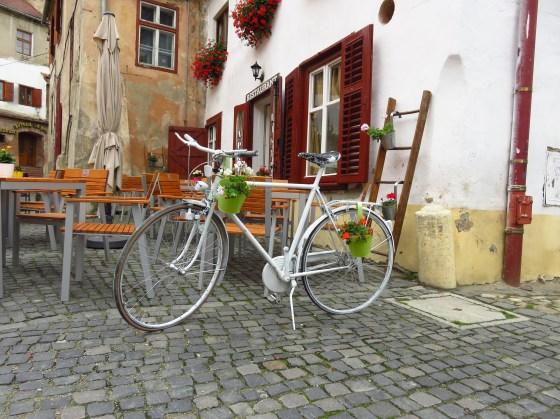 Dutch girl spots bike
