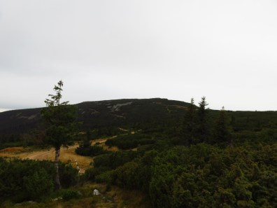 The road to the meteo station
